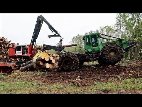 Logging 4 Acres of Old Pasture to Make It New Again (from Start to Finish)