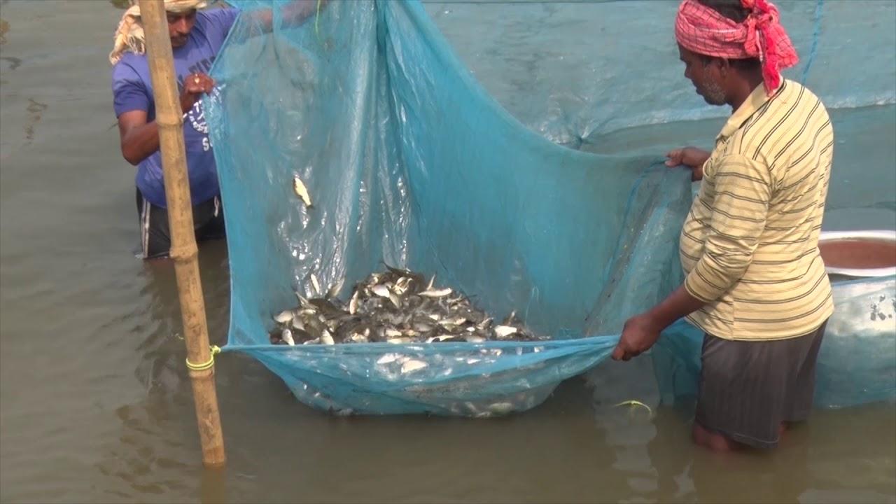 Climate Resilient Pen Culture | Flood Plane Wetland Fisheries | ICAR - CIFRI Barrackpore