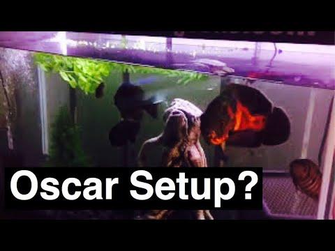 Oscar Fish Tank Setup - Size Does Matter
