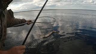 Моя первая в жизни рыбалка на Читском водохранилище на мелководье