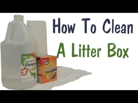 How To Clean A Litter Box