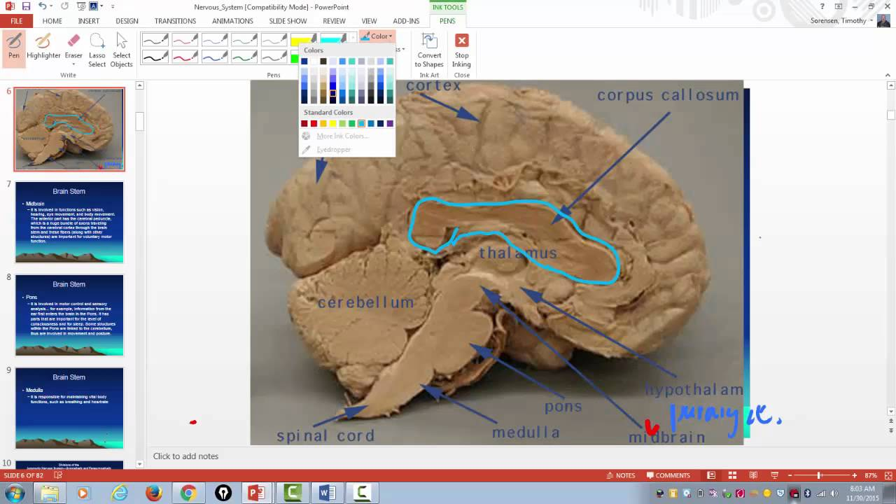 MAJOR PARTS OF THE BRAIN AND THEIR FUNCTION - YouTube