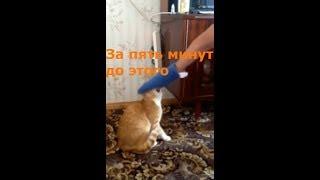 Топ 5 случаев нападения котов на человека
