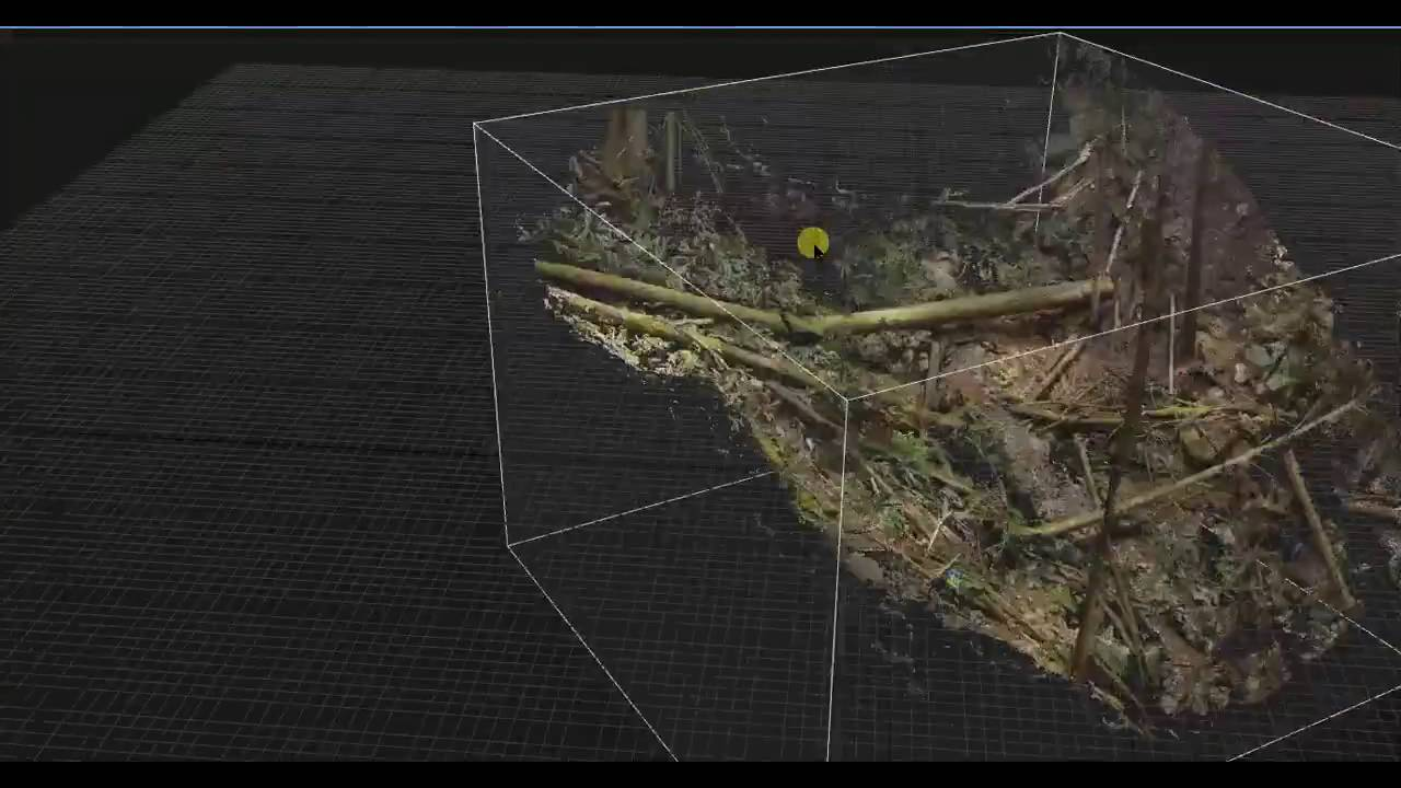 Realitycapture Photogrammetry 3d Scan Of Forest Part 1