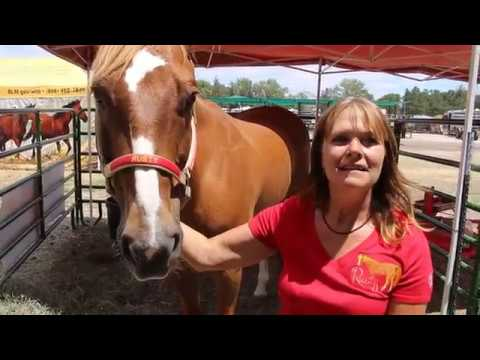 Kids Can Meet Rusty the Ranch Horse at Frontier Days