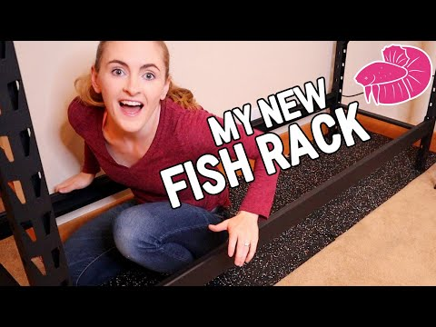 New Aquarium Rack - Making Room!