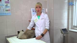 """Ветеринарная клиника """"Свой Доктор"""". Кормление домашних животных"""