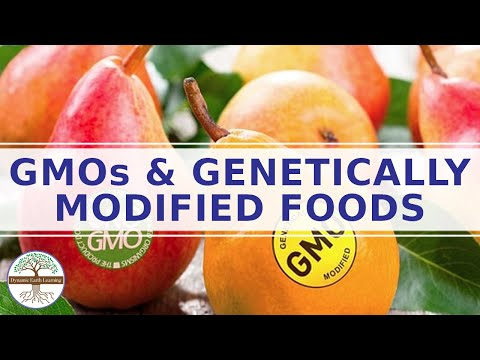 Genetically modified foods effects on human health - genetic modification of food pros and cons
