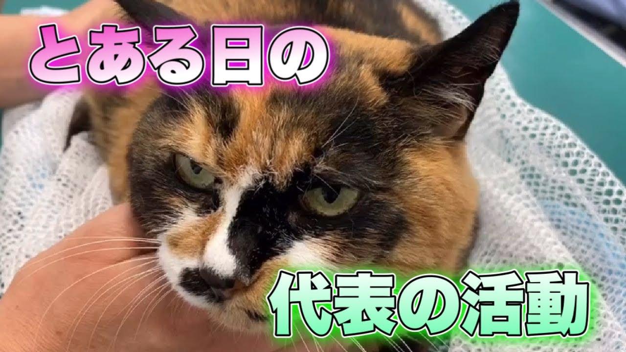 【活動日誌】ご飯の食べられない老猫ちゃんの通院や捕獲現場の偵察や準備【Volunteer work】