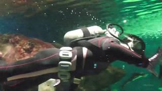 SHINSAPPORO SUNPIAZZA AQUARIUM サンピアザ水族館は札幌市の厚別区にあります。え、初めて来ました。小規模ながら私は結構面白かった。水族館や動物...