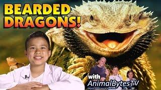 BEARDED DRAGONS! Pet Reptiles with EvanTubeHD & AnimalBytesTV!