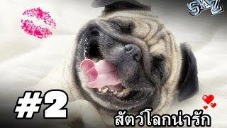 best-vines-รวมมิตรสัตว์โลก-2