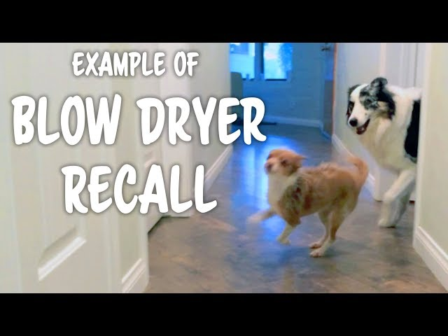 Example of grooming as a reinforcer - Professional Dog Training