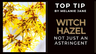 Witch Hazel in skincare