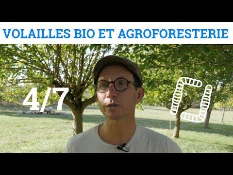 4/7 - Nicolas PETIT - Volaille Bio et Agroforesterie - L'élevage de pondeuses