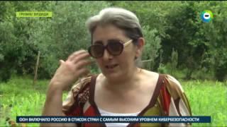 Полчища клопов уничтожили почти весь урожай в Грузии - МИР24