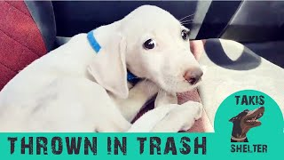This puppy was thrown in the trash but his luck was about to change  Samu  Takis Shelter