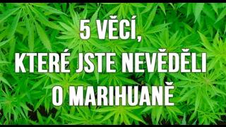 5 věcí, které jste nevěděli o marihuaně