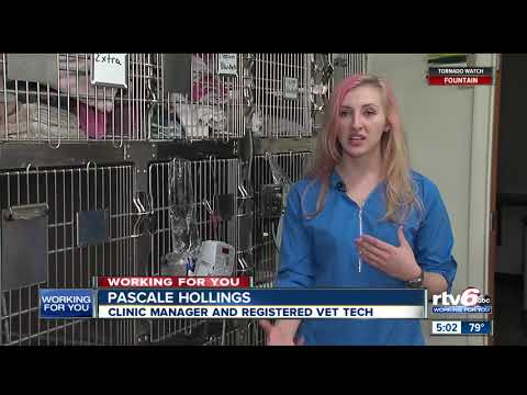 Deadly Virus Impacting Thousands Of Dogs, Indianapolis Animal Shelters, Clinics Say