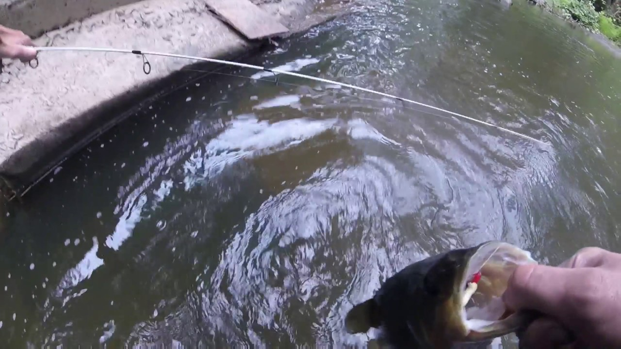 Small creek fishing in wapwallopen pa youtube for Small creek fishing