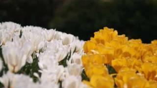 クロマチックハーモニカとシンセサイザーで「春よ、こい」を演奏しまし...