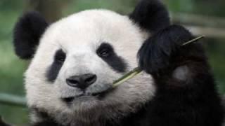 Chinese New Year Music - Purple Bamboo Melody 紫竹调