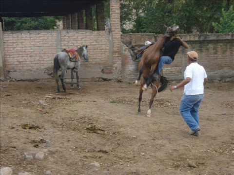 Vaqueros de pura