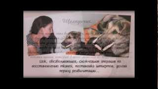 Волонтеры в защиту животных г.Волгоград