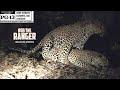 WILDlife: Leopards Boinking In The Dark