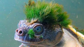 Download STRANGEST Animals That Are Hard To Believe Are REAL! Mp3 and Videos