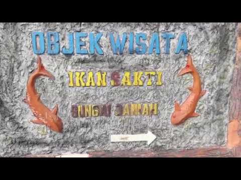 Legenda Ikan Sakti Sungai Janiah - Explore West Sumatera