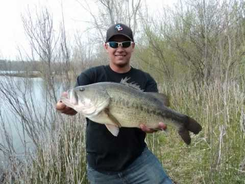 Giant bass at the quarry youtube for Quarry lakes fishing