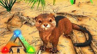ARK HOW TO  TAME OTTERS! - WHERE TO FIND OTTERS! - OTTER BREEDING! - Ark Vanilla! S4! Ep 23!