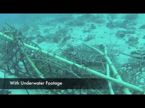 ELH: Intro for Modest's Interview on Marine Degradation in Tanzania