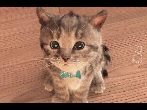 Кішкентай мысық | Балалар ойыны | My Favorite Cat
