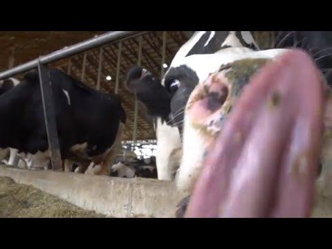 Visit New Day Dairy near Clarksville, Iowa