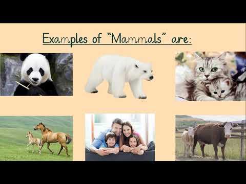 Classification Of Animals. Mammals, Birds, Reptiles , Amphibians, Fish.