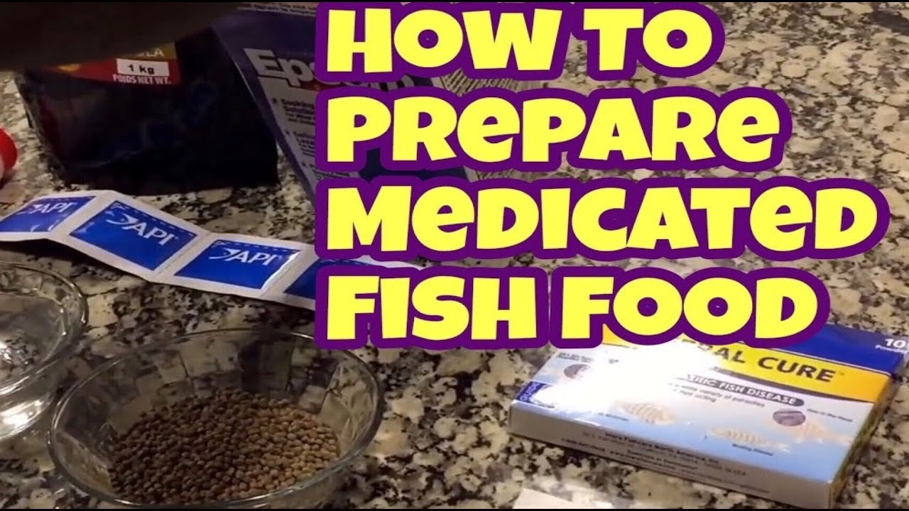 How To Make Medicated Fish Food To Treat Internal Parasites | How To  Prepare Medicated Fish Food