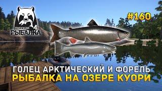 Голец Арктичиский и Форель Рыбалка на озере Куори Русская Рыбалка 4 160