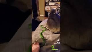 Scaring my cat prank