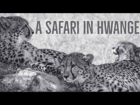 Our Safari in Hwange National Park, Zimbabwe