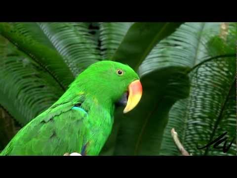 Colorful Tropical Birds -  Bloedel Conservatory - YouTube
