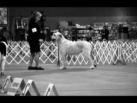 5-27-2018 Southeast Arkansas Kennel Club-Monroe LA