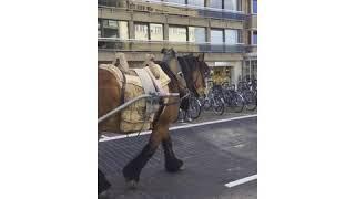 Bei den letzten Pferdefischern