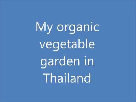 My organic vegetable garden in Thailand