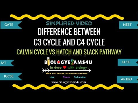 Difference between C3 and C4 cycle (C3 vs C4 cycle)