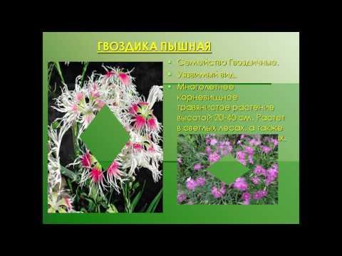 презентация красная книга растений тульской области
