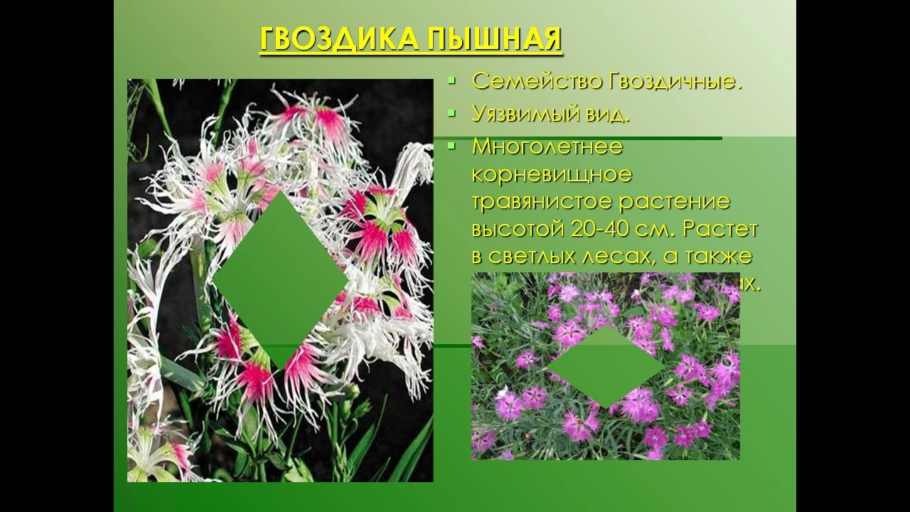 самые самые в мире растений и животных презентация