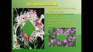 видео Красная книга Тульской области