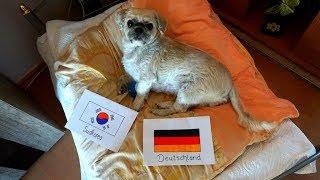 Deutschland VS Südkorea - Quincy Orakel - FIFA WM 2018